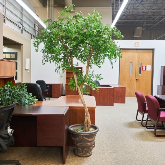 Used Faux Japanese Maple Tree ACC1679-027